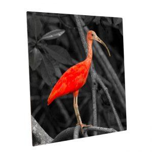 Fotopaneel-aluminium<BR>Rode Ibis