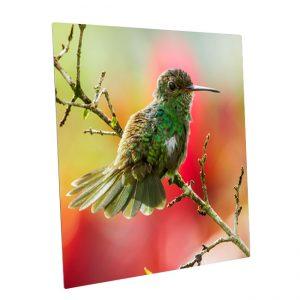Fotopaneel-aluminium<BR>Kolibri01