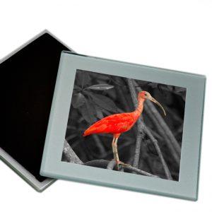 Onderzetters Glas <BR>Rode Ibis02