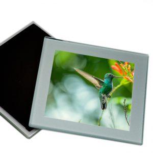 Onderzetters Glas <BR>Kolibri03