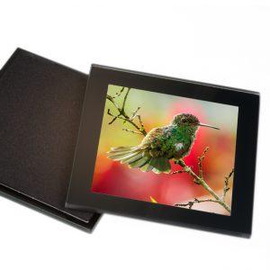 Onderzetters Glas <BR> Kolibri04